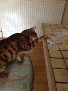 Max fancies a slice!