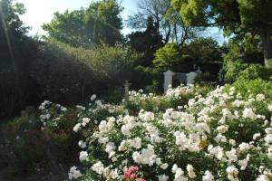 The garden in The Garden House, Franschhoek, South Africa