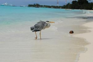 Bird at Kuramathi Island Resort in Maldives