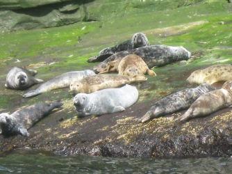 Seals on the shore (c) Roy Longmuir