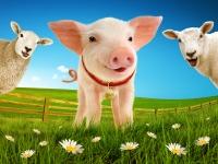 babe-the-sheep-pig-landscape-image
